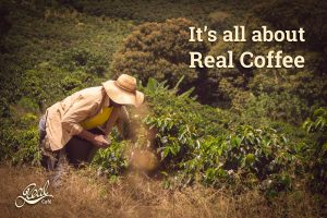 A photo of coffee beans being harvested in Colombia